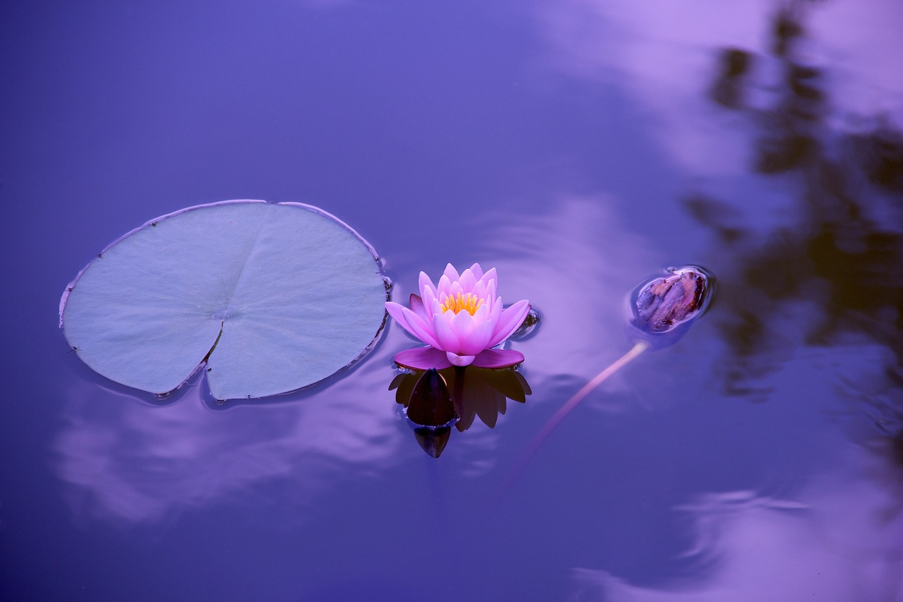 lotus-flower_meditation